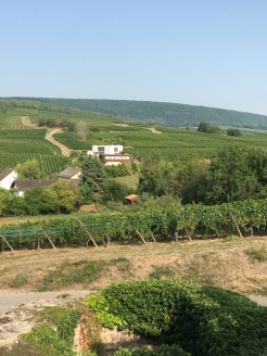 Alscae vineyards