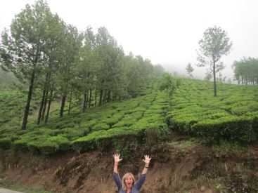 Tea picking in Munar, India